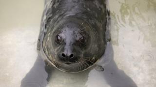 Brian May the seal