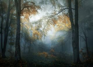 Деревья ранней осенью