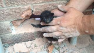 Man holding a kitten rescued from cavity wall