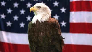 Орел на фоне флага Соединенных Штатов