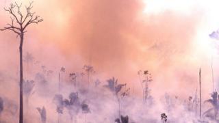 пожежі у Бразилії
