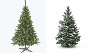 Why Christmas Trees Arent Perfect.Christmas Trees Real Or Fake Bbc News