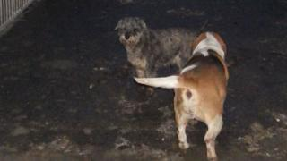 Dogs in squalid conditions