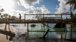 A woman and a dog remain on a bridge with a net placed under it to try to block oil from reaching a river after an oil spill at the Imbassai beach, Mata de Sao Joao municipality, Bahia