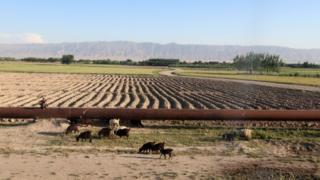 گاز افغانستان