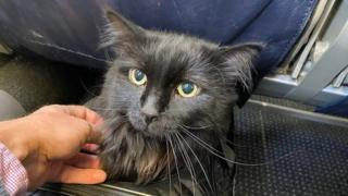 Sasha the cat is pictured en route to Portland