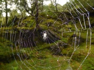 Spider's web in Dorlin, Ardnamurchan