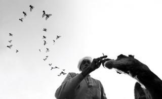 Man, camel and birds