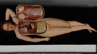 Université de Montpellier anatomical collection/Marc Dantan/Thames & Hudson Ltd