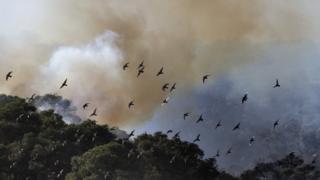 ฝูงนกบินเหนือกลุ่มควันไฟที่ป่าคาร์เมล ในอิสราเอล