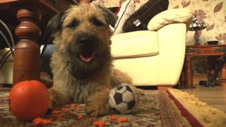 Ralph the Terrier