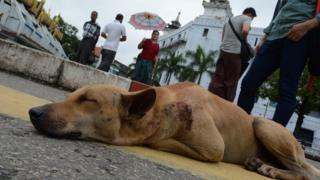 ရန်ကုန်ပြည်သူ့ဆေးရုံကြီးတခုထဲကို ၂၀၁၈ မှာ ခွေးကိုက်ခံရလို့တက်ရောက်ကုသခံရသူ (၁၆၀၀၀) ကျော်ရှိတယ်လိုသိရပါတယ်။