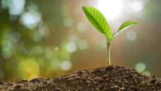 File photo: Generic young green growing plant shoot on a blurred natural background