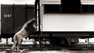 Lion on a train