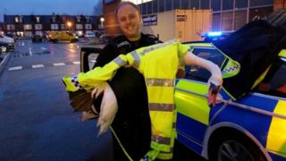 PC Payne with swan
