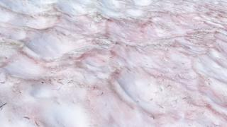 Nieve rosada
