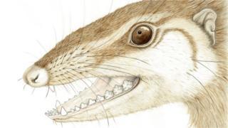 An illustration of Wareolestes rex