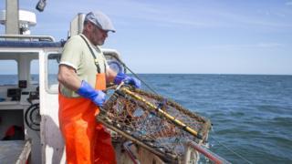 Fisherman lowering pot into sea