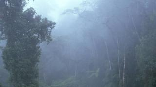 A cloudy rainforest