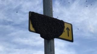 Bees on a road sign