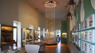 Sala de insetos do Museu Nacional