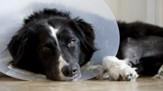 "A judge ruled that the dog's illness amounted to ""serious or family personal reasons"" for leave"