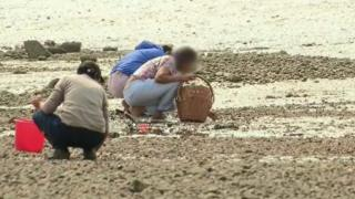 Pickers at the estuary
