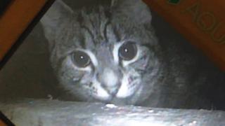 Cat under the floorboard