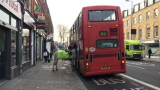 Horse on a bus
