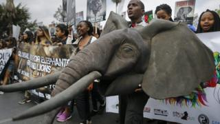 Demonstrators hold up placards and chant slogans as they march in support of protecting elephants, rhinos and lions and to raise awareness that they are endangered species, in downtown Nairobi, Kenya- Saturday 15 October 2016