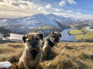 Two Border Terriers on Castlelaw Hill in the Pentlands.