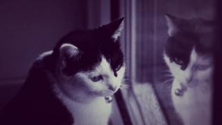 Reflected cat
