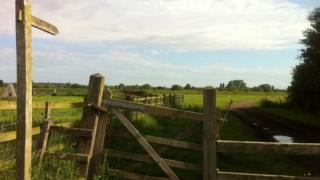 Field near Barton in Fabis
