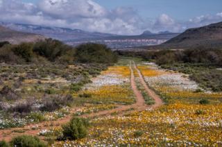 صحرا میں پھول