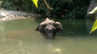 environment The elephant