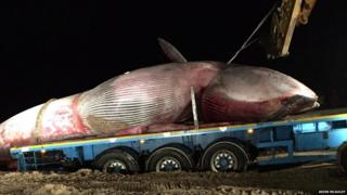 The whale was removed from the beach on Monday night