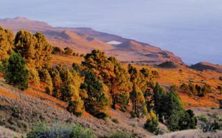Pine Forest, El Hierro