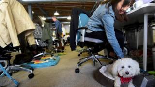 موظفة تصطحب كلبها معها في مكتب العمل