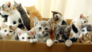 A box of abandoned kittens