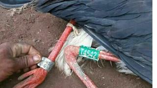 Allaattii Waayit Ispoorki Lixa Oromiyaa Iluu Abbaa Booraa keessatti qubeelaa fi barreefama miilla isaa irraa qabu qabu waliin argame jedhame.