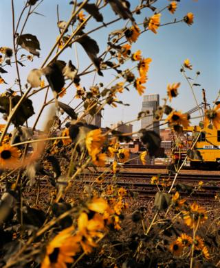 Omaha, Downtown Through Sunflowers