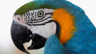 A macaw is seen at Africano animals park, along the Cairo-Alexandria desert road, Egypt June 7, 2017.
