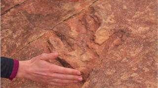 A human hand for comparison in front of a dinosaur footprint
