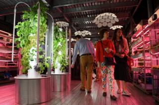 Vegetables growing under artificial light in the IKEA: Gardening Will Save The World garden at Chelsea Flower show