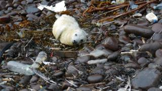 seal pup surrounded by litter