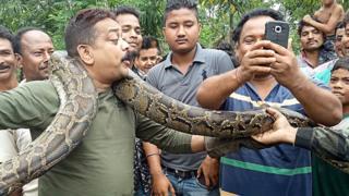 Dutta dan ular sanca