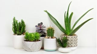 environment Potted house plants