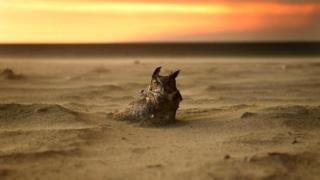 Огонь приближается - сова это чувствует (снимок сделан в Калифорнии)