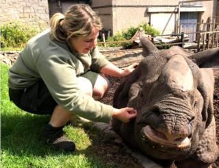 animals Phoebe with Bertus the rhino