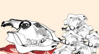 Kittens skulls and bones